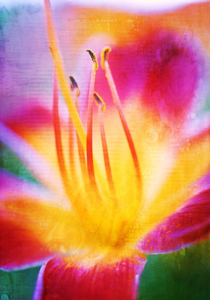 vibrant flower copy